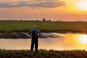 Old man standing in field with hands on hips at sunset, considering retiring from farming