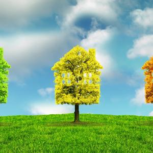 Three topiary houses on tree trunks, one green, one yellow and one orange.